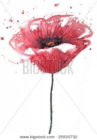 Poppy flower, watercolor