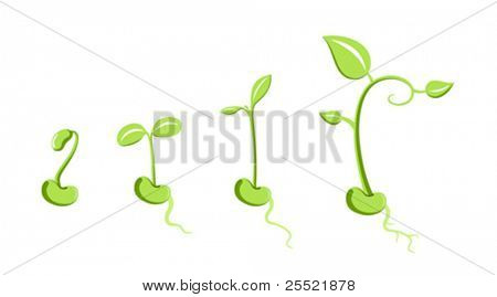 Vector sprouts isolated on white