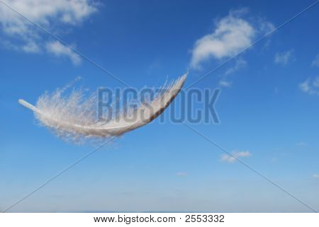 Feather Floating In The Summers Sky