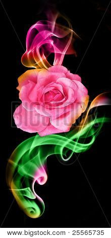 A fantastic rose in the colored smoke from aromatic sticks, excellent background