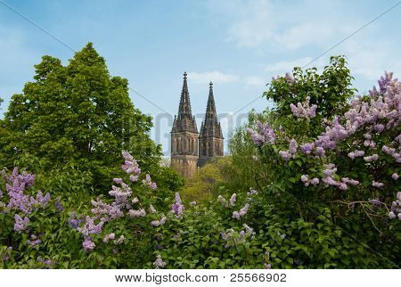 Vysehrad - Peter and Paul Cathedral in Prague and the blooming lilacs
