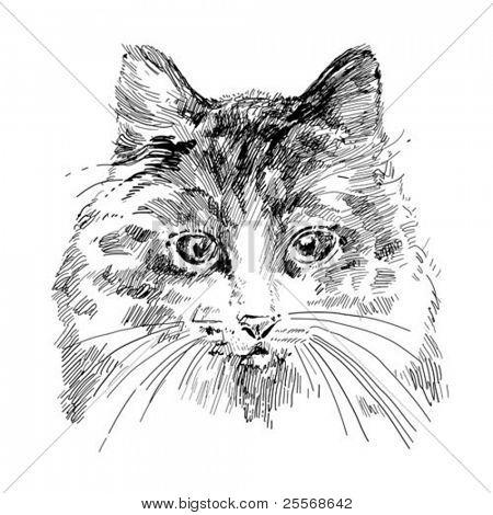 vector dibujo gato