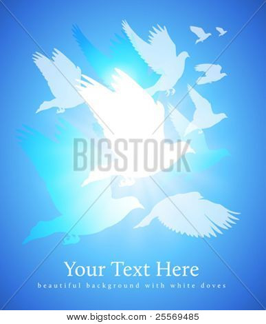 white doves background