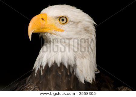 Sea Eagle #1