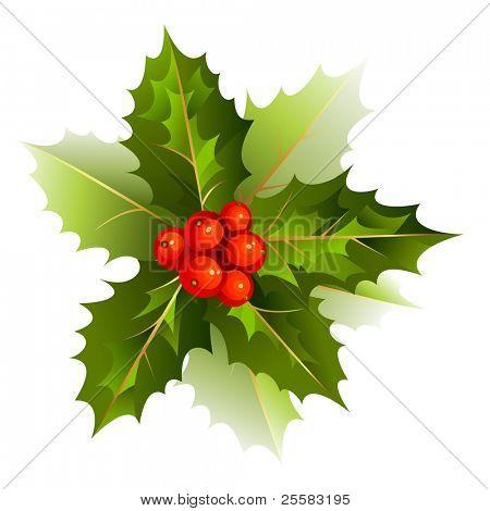bom ramo de azevinho de Natal