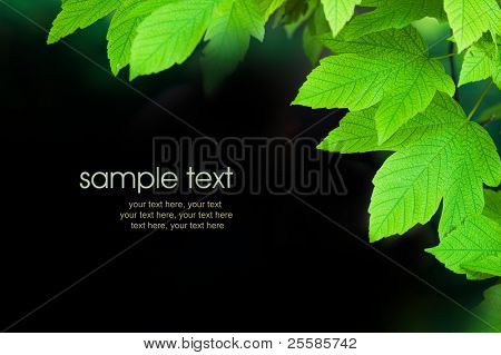 card design with green leaves and text