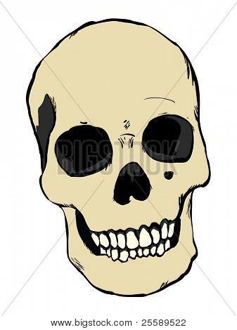 Vector human skull