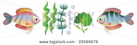 Small fishes and seaweed on a white background. You can change an arrangement of objects for the discretion