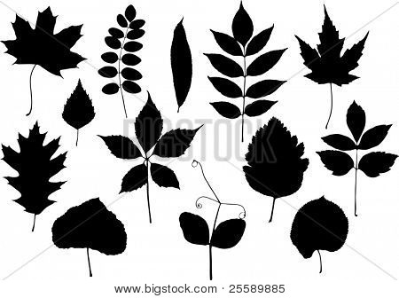Set of vector silhouettes of leaves