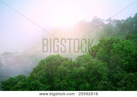 Rainforest. Morning sunlight
