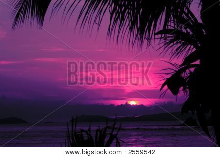 Tropical Sunset With Palm
