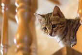 A Little Naughty Kitten poster
