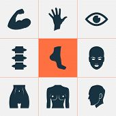 Physique Icons Set With Face, Eye, Belly And Other Hand Elements. Isolated Vector Illustration Physi poster