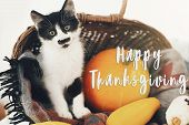 Happy Thanksgiving Text, Seasons Greeting Card. Thanksgiving Sign. Cute Kitty, Pumpkin, Wicker Baske poster