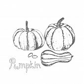 Pumpkin And Pumpkin Seeds. Hand Drawn Pumpkin And Seed On White Background. Farm Market Product. Vec poster