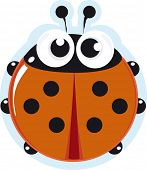 picture of creepy crawlies  - Ladybird - JPG