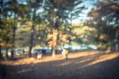 Filtered Tone Blurry Background Lakeside Campsite At Fall In Oklahoma, Usa poster