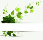 foto of green leaves  - branch with fresh green leaves - JPG