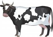 Vector black and white cow