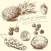 picture of hand drawn  - fruit  - JPG