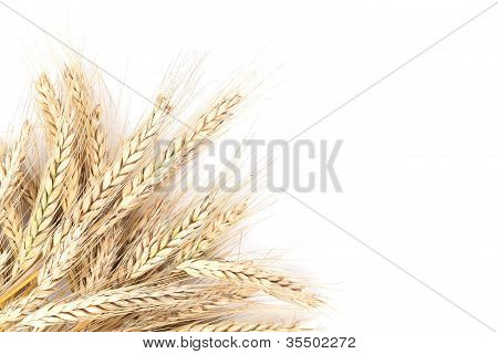 Barley on white background