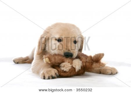 Puppy And Its Toy