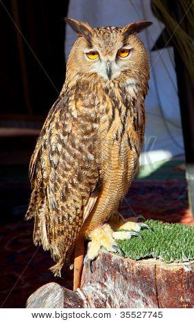 Bubo bubo eagle owl night bird on trunk grass