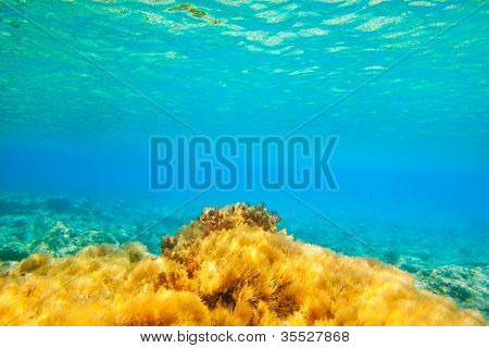 Ibiza Formentera underwater anemone seascape in golden and turquoise