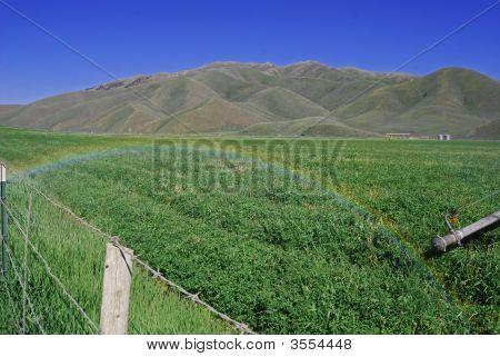 Agricultural Rainbow
