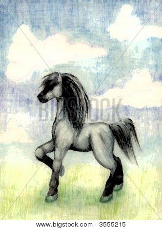 Pferd im Feld Farbe