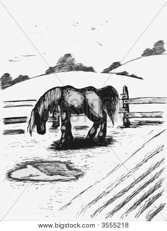 Pferd zu grasen, grau
