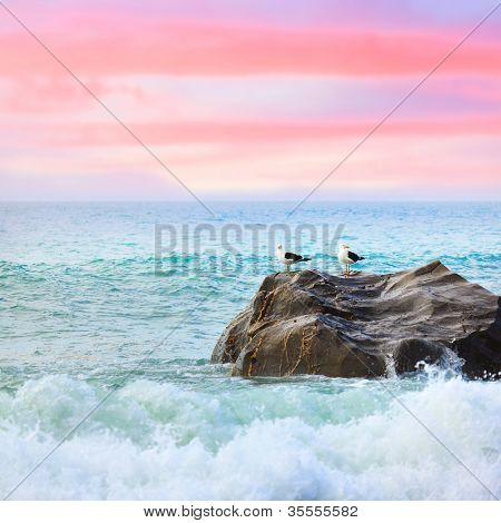 Two seagulls on the rock at sunset. Tasman sea