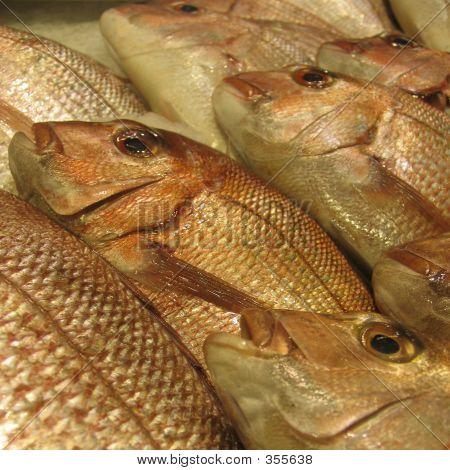 Golden Snapper auf ein Fischmarkt