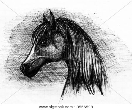 Portrait Of The Horse By Pencil