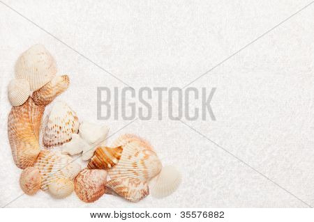 Sea Shell Border On White Fluffy Towel Texture Background