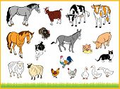 Set Of Farm Animals Isolated In White