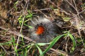 pic of villi  - Cute furry caterpillar sitting on a blade of grass - JPG