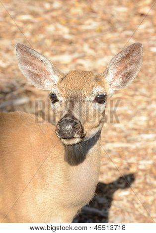 Beautiful Deer In The Wild