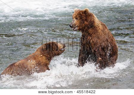 Grizzlies Fighting