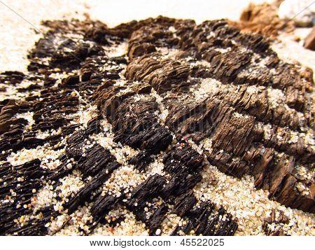 Wood And Sand