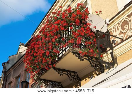 Balcony With Flowers Geranium