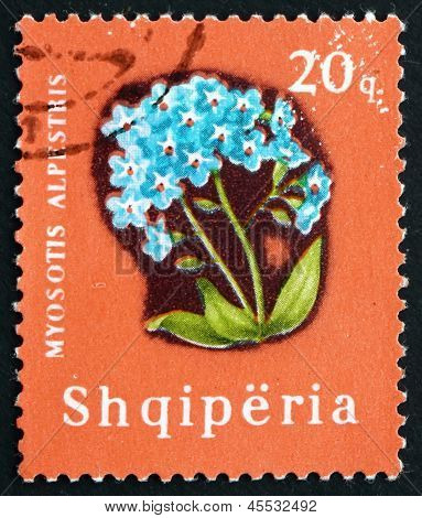 Postage Stamp Albania 1965 Alpine Forget-me-not, Flower