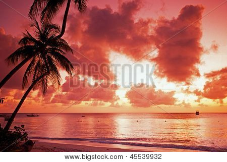 Palm trees at sunset, Pigeon Point, Tobago.