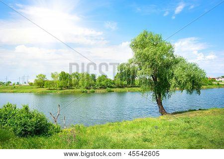 Tree and lake