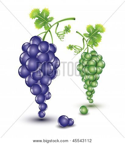 Dark and bright grapes