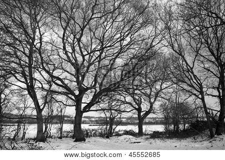 Imagem preto e branco das árvores dormentes na neve