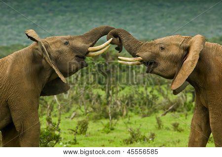 Pushing Elephants
