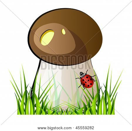 Vector Mushroom Boletus
