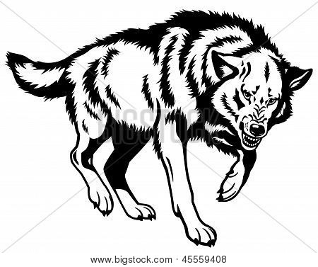 Canis Lupus Black White