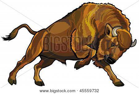 Bisonte-europeu